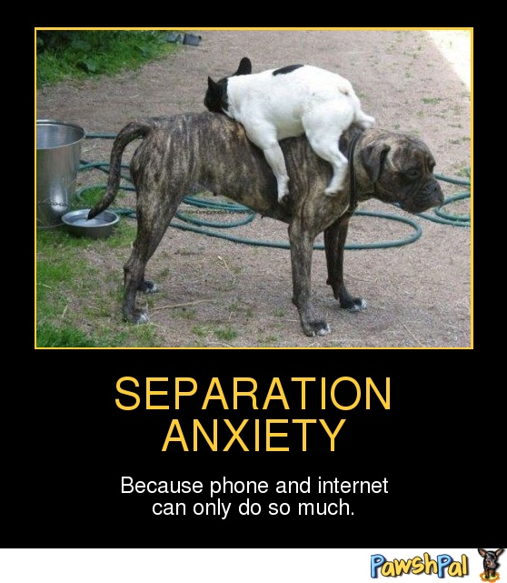 relationship separation anxiety meme