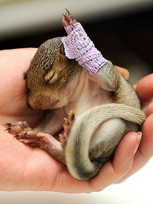 Baby squirrel cast....i want to snuggle it!