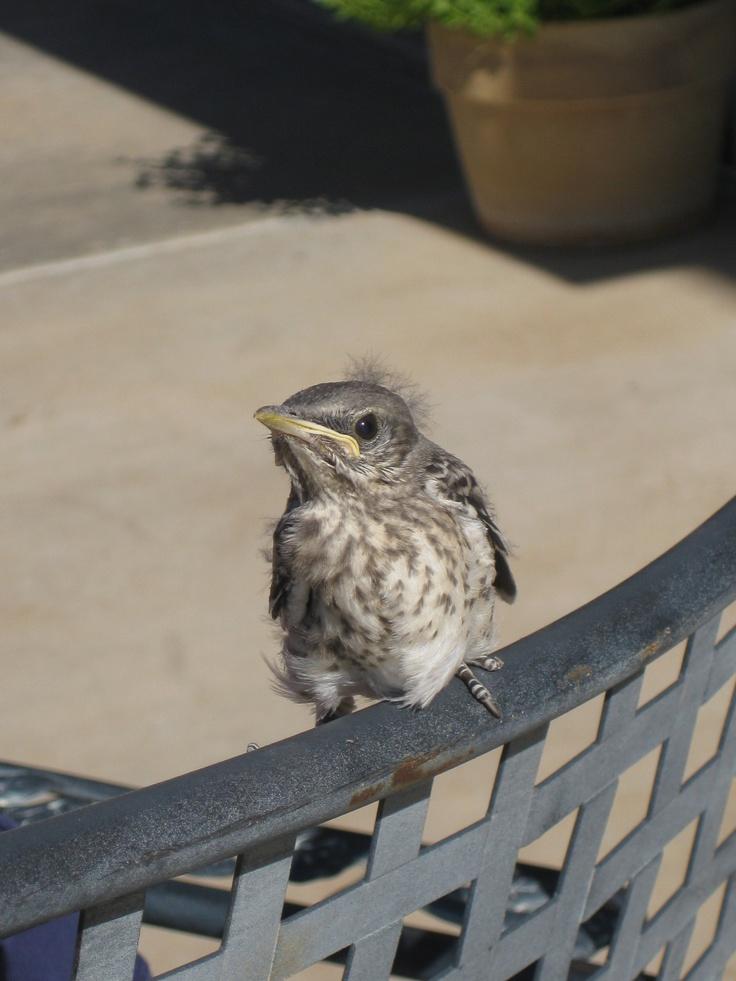 Bird flying from nest - photo#9