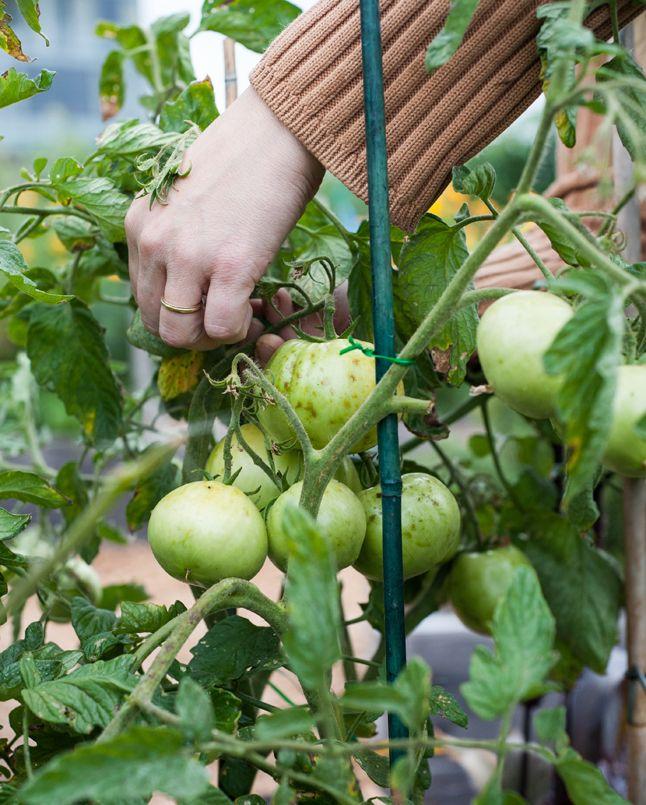 ... Heirloom Tomato Salad, Stracciatella, Red Pepper Jelly Vinaigrette