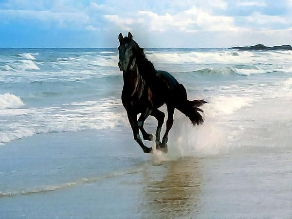 Black horse Running through water Print by Lanjee Chee - photo#9