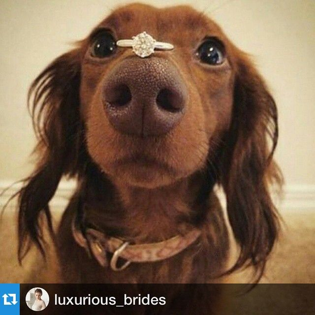 15 French Bulldogs Help Man Stage Unbearably Cute Wedding Proposal