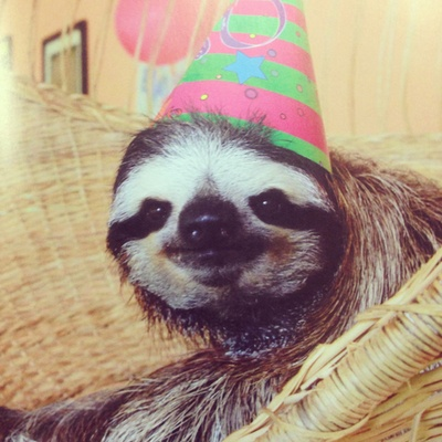 Sloth in party hat - photo#14