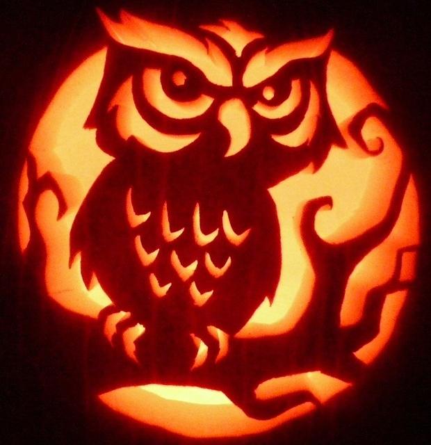 Owl by pumpken via flickr pumpkin carving and