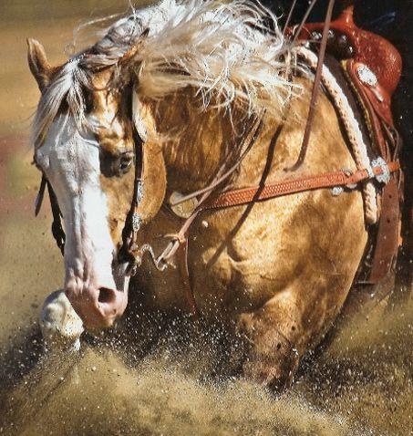 Big Chex To Cash, Quarter Horse