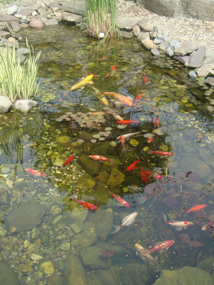 Beautiful koi pond garden fish ponds pinterest for Koi ponds and gardens