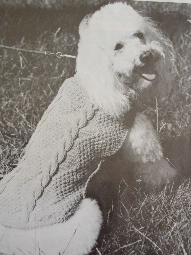 Vintage knitting pattern small dog coat