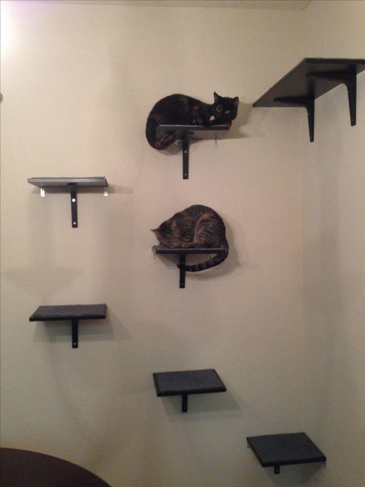 ikea hack cat shelves cats pinterest