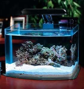 cute little tank Fish Tank Decor Pinterest