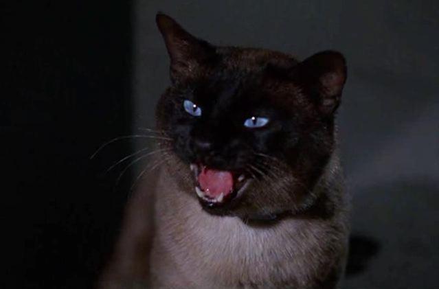 CATS ON FILM: THAT DAR...