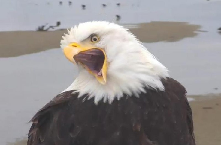 Bald Eagle Nest Cam | Eagles | Pinterest