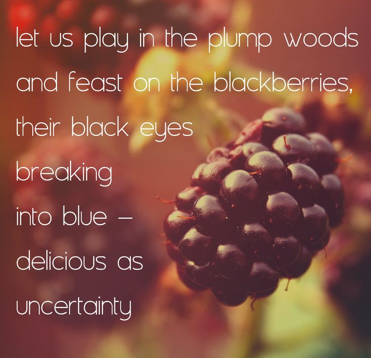 blackberries poem The poem begins with a very descriptive account of the speaker picking blackberries in late summer the descriptions are vivid and sensuous, using a variety of colours and images to describe the.