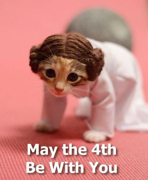 How To Respond To May The 4th Be With You: Pin By Molly Price On Animals