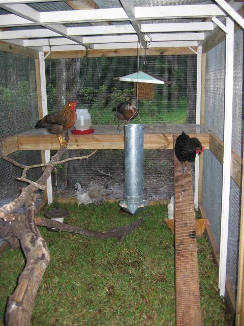 Creek Coop  Irf1983s Chicken Coop  BackYard Chickens Community