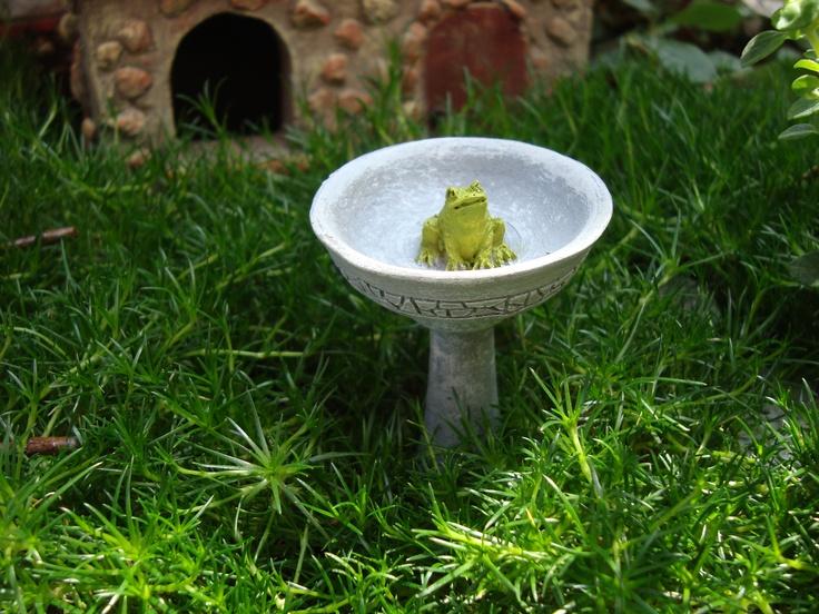 Beautiful Frog Bird Bath 736 x 552 · 198 kB · jpeg