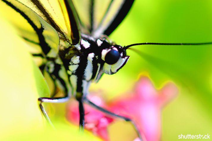 Butterfly Macro Phot