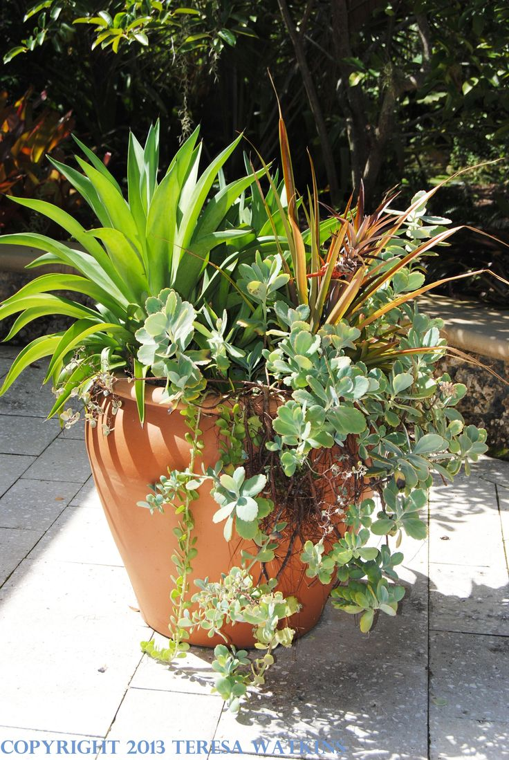 Pin by grace warholic on secret gardens pinterest - Tropical container garden ...