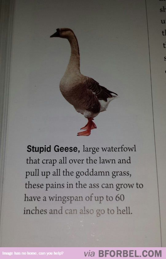 Definition Of Geese… | Miscellaneous Humorous Pictures | Pinterest