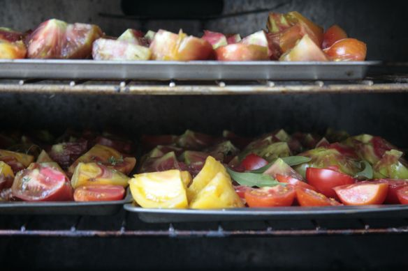 Preserving your harvest: Oven dried heirloom tomatoes with sea salt