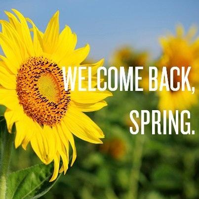 welcome back spring spring pinterest