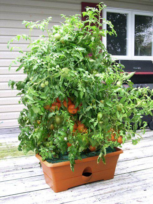 These 5 self watering planters make vegetable gardening easy for Easy vegetable garden