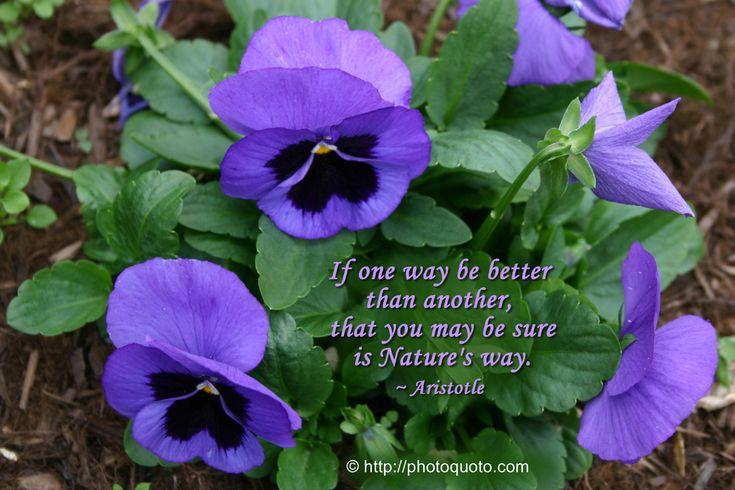 Aristotle Nature Quote