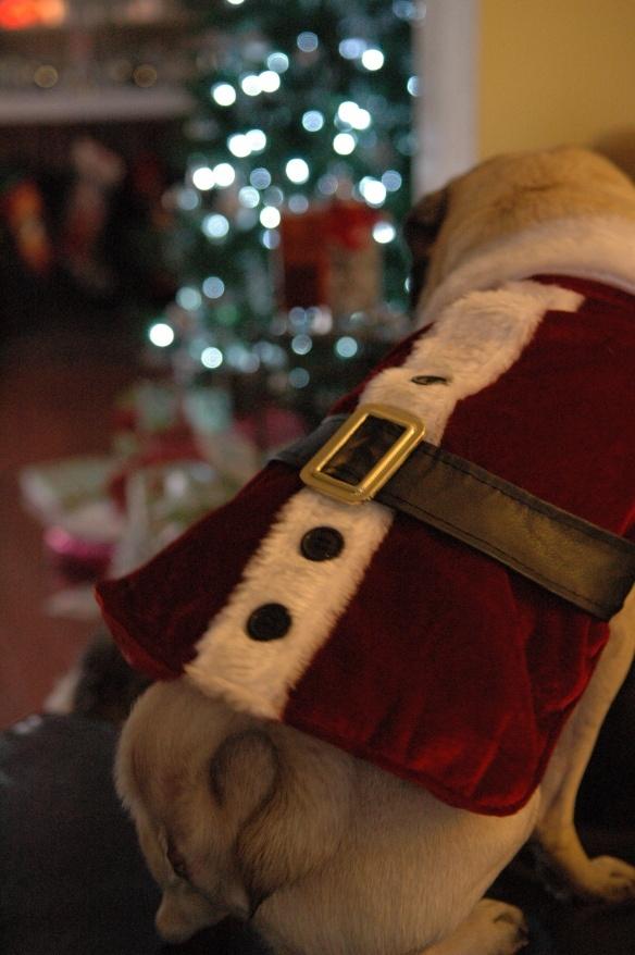 Santa Pug!