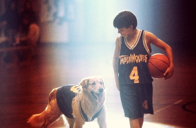 "Air Bud (""Air Bud"")   The dog shoots hoops. What else needs to be said?"