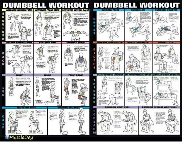 Dumbbell workout. | - Health & Beauty - | Pinterest