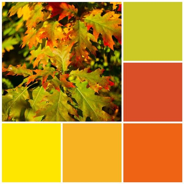Fall Color Scheme Best Of Fall Leaves Color Scheme Pictures