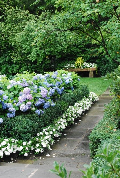 Blue hydrangeas, boxwood, and white impatiens