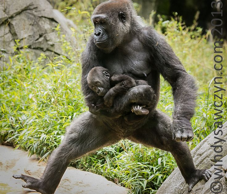 binary options gorilla grodd