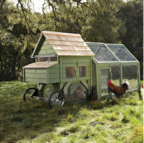 Portable backyard chicken coop chickens pinterest for Mobile chicken coops