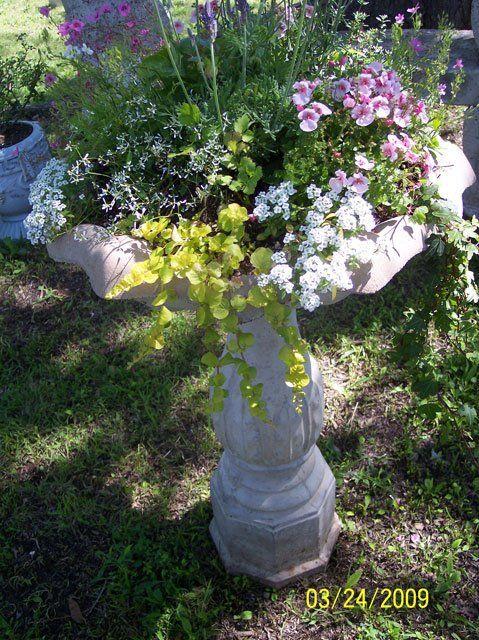 flowers to go.com
