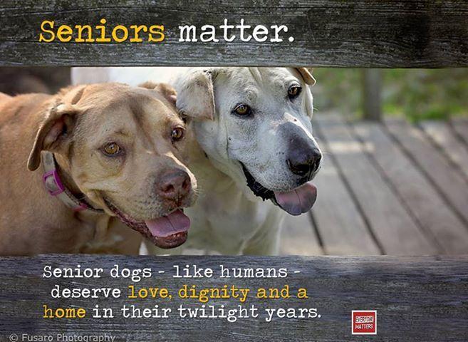 adoption puppies senior