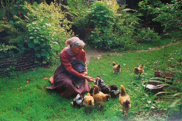 Tasha Tudor. This pic reminds me of my Grandma, if only they were ducks. But this woman was awesome