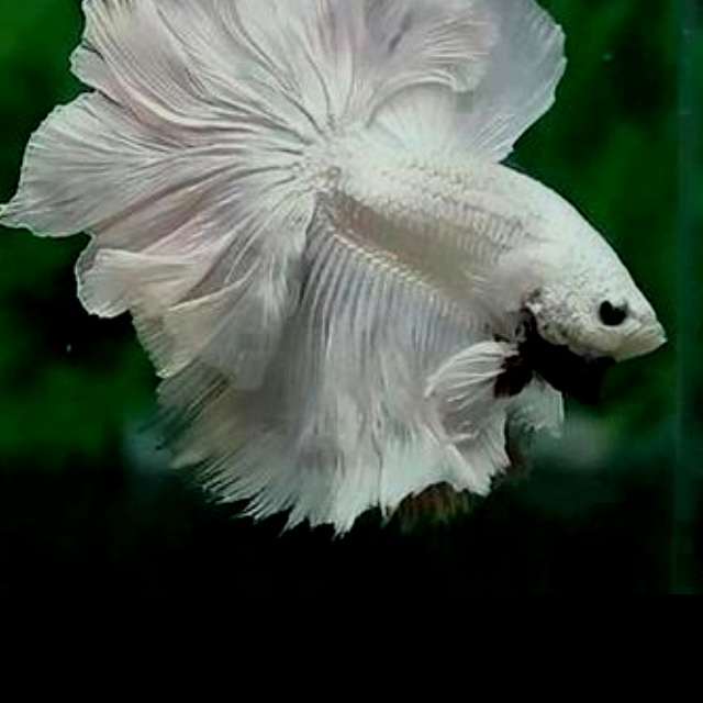 Beautiful Fish Exotic Fish Pinterest