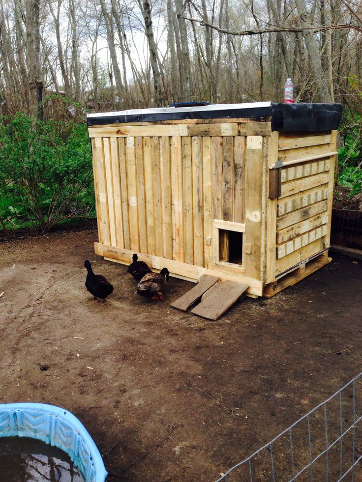 My Duck Coop Made Out Of Pallets Interesting Things