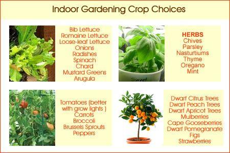 Indoor vegetable gardening how does your garden grow for Indoor vegetable garden