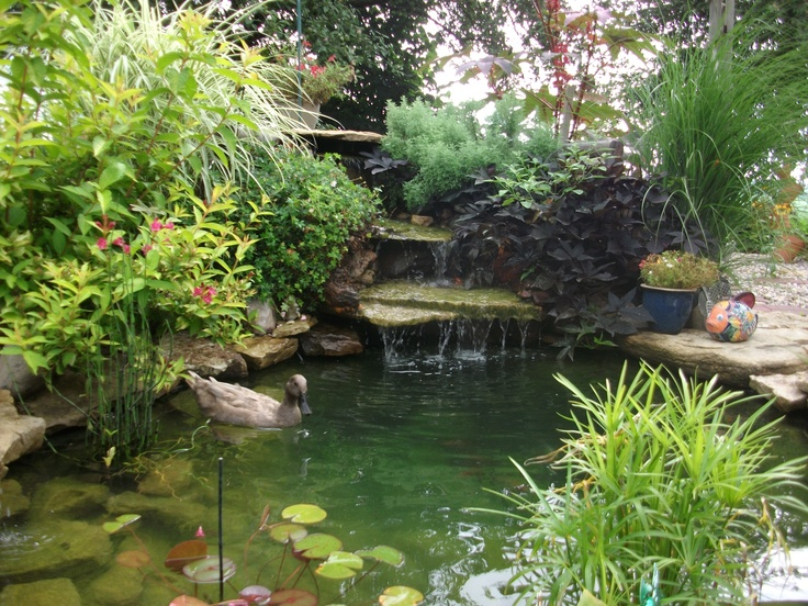 Nice duck pond idea backyard ideas pinterest for Garden pond ideas pinterest