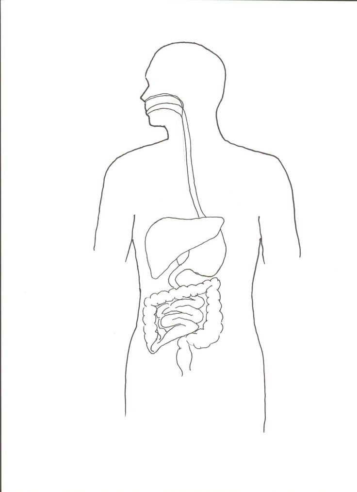 how to draw human digestive system in easy way