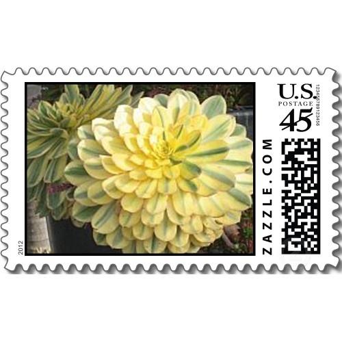Aeonium postage succulent wedding inspiration pinterest