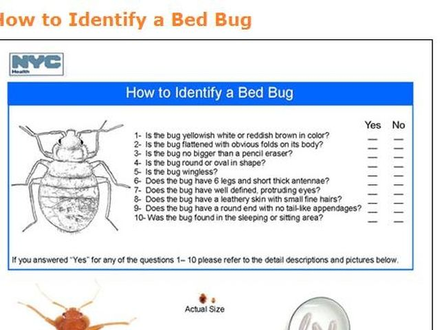 Bed Bug How to identify and get rid of bed ... | Bed Bug Facts | Pinterest