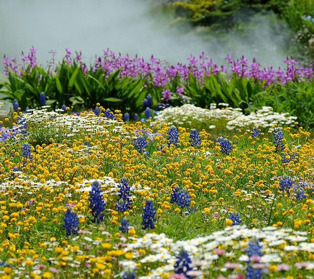 Wildflower Garden Nature Pinterest