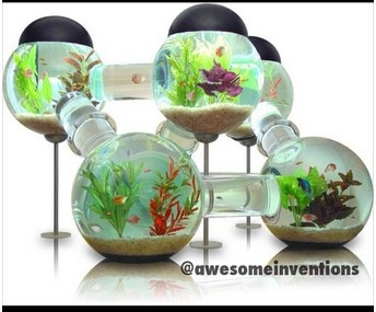 hamster cage fish tank cool pinterest