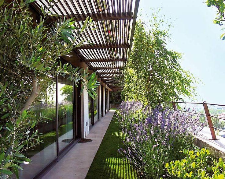 Pin by patricia pel ez on p p jardines plantas y flores - Plantas para jardin exterior ...