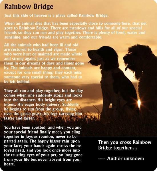 Rainbow Bridge | So true!!! | Pinterest