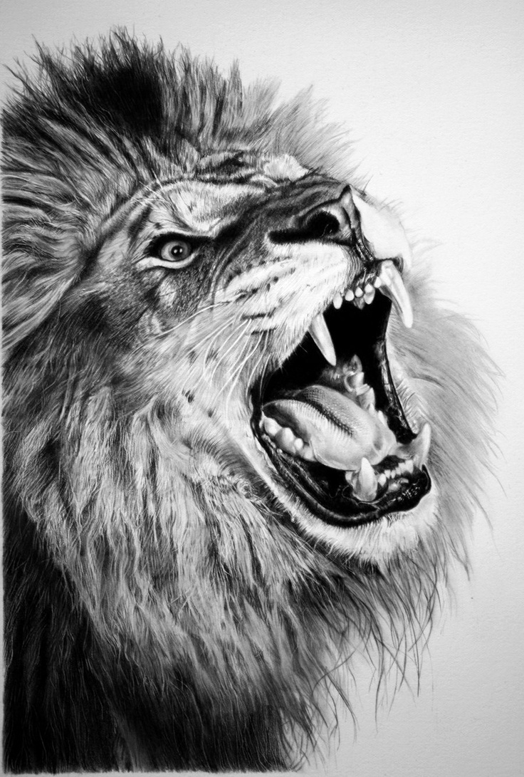 Lions Roaring Drawing Draw Tumblr Lion Roaring