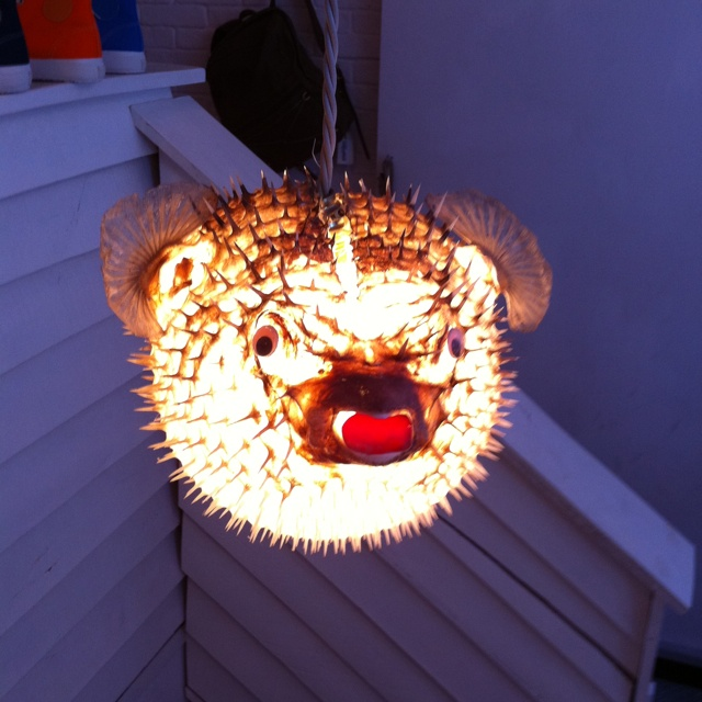 Real puffer fish light for Puffer fish lamp