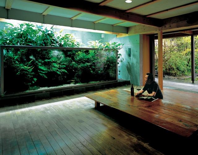 Takashi Amanos Personal Aquarium http://www.thefancy.com/things ...